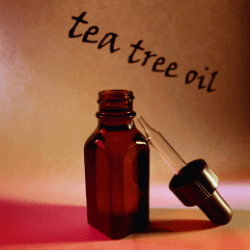 Läuse vorbeugen Teebaumöl